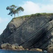 eucalipto-acantilado-castro-urdiales