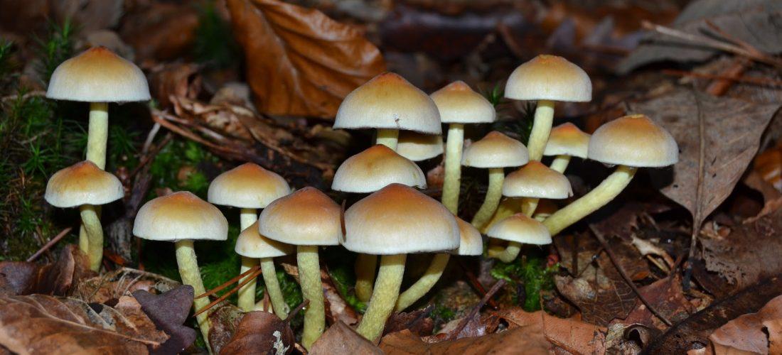 Buscando setas y hongos